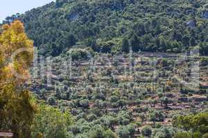 Terrassenfeldanbau auf der Insel Mallorca, Spanien.