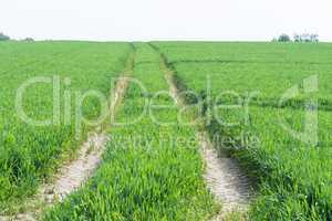 Treckerspuren durch ein grünes Ackerfeld