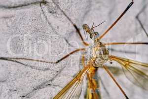 Malarial mosquitoes on the wall