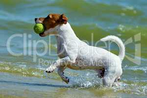 Jack Russell carries the ball
