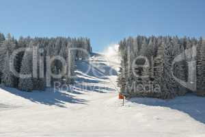 Snowboard and ski slope through fir forest