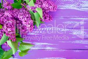 Lilac branch of lilac with green leaves on a purple wooden backg