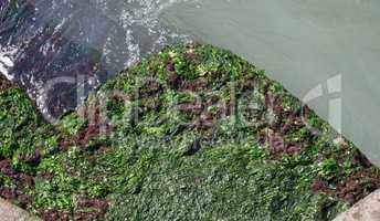 Algae at sea harbour