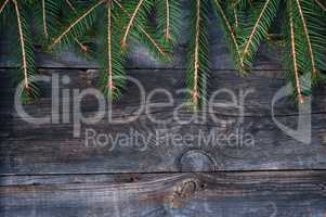 branches of spruce on a gray wooden background