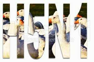 Vogelgrippe H5N1