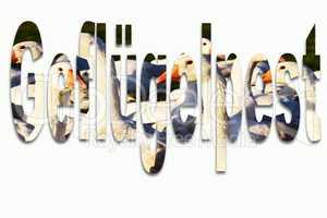 Geflügelpest H5N1