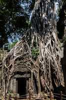 Ta PRohm Temple, Angkor, Siem Reap, Cambodia