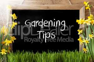 Sunny Spring Narcissus, Chalkboard, Text Gardening Tips