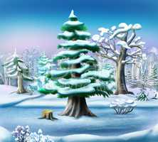 Snow-covered Pine Tree in a Winter Forest