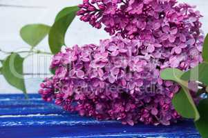 branch of purple lilac with green leaves on a blue wooden surfac
