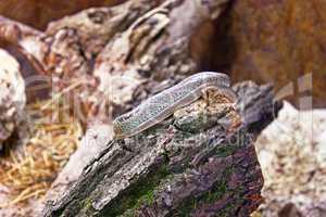Snake on wood