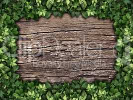 climbing plant on a wooden background