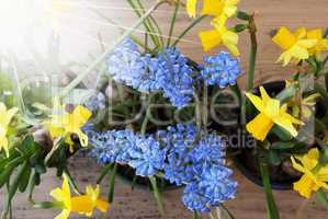 Sunny Spring Flowers, Narcissus And Grape Hyacinth