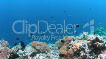 Apo Reef, Coral reef in Philippines