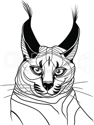 Cat caracal kitten wild animal sketch tattoo symbol illustration t-shirt vector icon. Diving design.