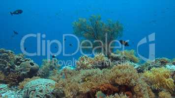Coral reef with a sea fan and plenty fish