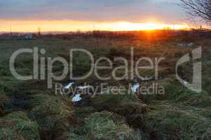 sunset in the field, puddles and mud in the field