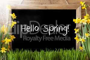 Sunny Narcissus, Chalkboard, Text Hello Spring