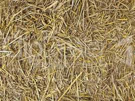 Hay seamless background.
