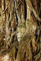 A buddha head inside a tree in Ayudhaya,Thailand.