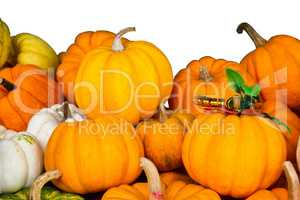 Pile of small pumpkins.