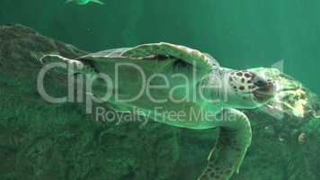Reptiles And Sea Turtles