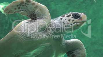 Sea Turtles Reptiles And Wildlife