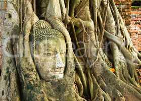 A buddha head inside a tree in Thailand