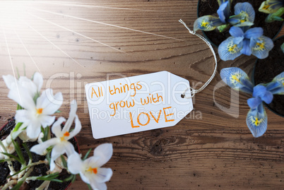 Sunny Flowers, Label, Quote All Things Grow With Love