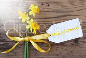 Sunny Spring Narcissus, Label, Text Welcome