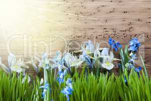 Sunny Spring Meadow With Blue Crocus And Gras, Copy Space