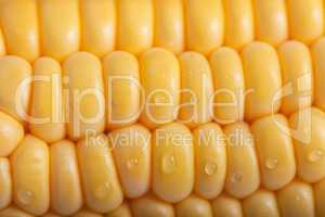 Pattern of fresh sweet corn