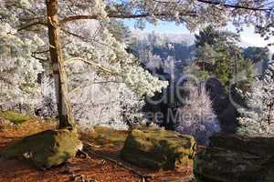 Elbsandsteingebirge im Winter  - Elbe sandstone mountains in winter