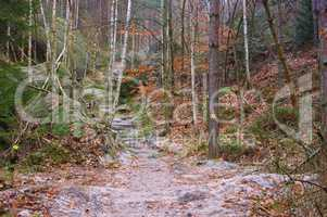 Wanderweg im Elbsandsteingebirge - Hiking trail in the Elbe sandstone mountains