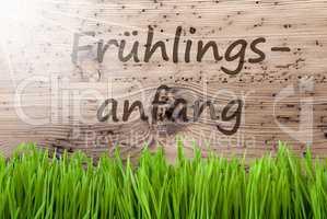 Bright Sunny Background, Gras, Fruehlingsanfang Means Beginning Of Spring