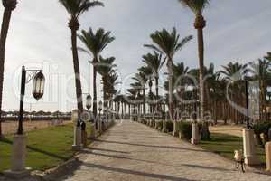 An oasis of palm trees and greenery photo. Embankment along the beach in Makadi, Egypt