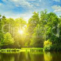 picturesque lake, summer forest on the banks and the sunrise