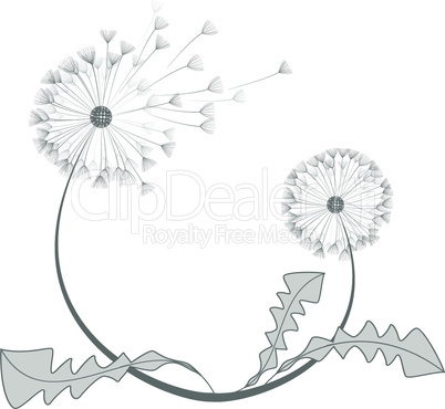 Vector dandelion flower