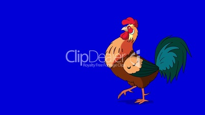 Colorful Rooster Walks. Classic handmade Animation Isolated on Blue Screen