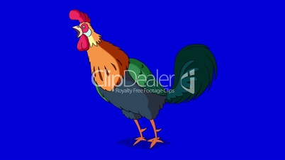 Colorful Rooster Crows. Classic handmade Animation Isolated on Blue Screen