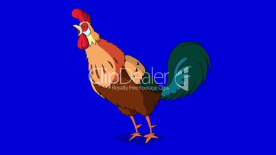 Rufous Rooster Crows. Classic handmade Animation Isolated on Blue Screen