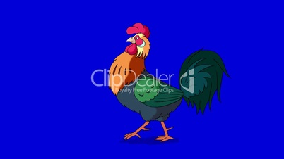 Rufous Rooster Walks. Classic handmade Animation Isolated on Blue Screen