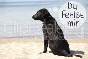 Dog At Beach, Du Fehlst Mir Means I Miss You
