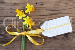 Yellow Narcissus, Label, Fruehlingsanfang Means Beginning Of Spring