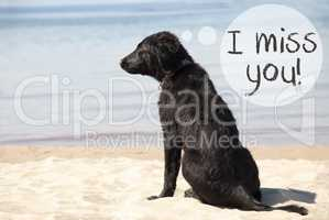 Dog At Sandy Beach, Text I Miss You