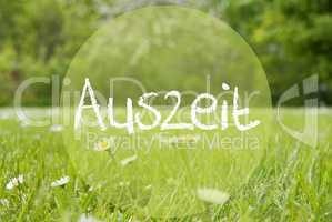 Gras Meadow, Daisy Flowers, Auszeit Means Downtime