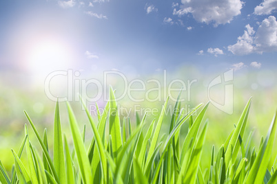 Green grass and cloudy sky