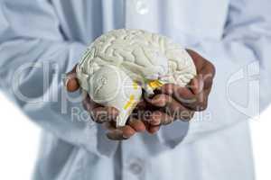 Doctor holding anatomy brain