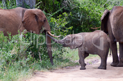 Elephant and her cub crossing