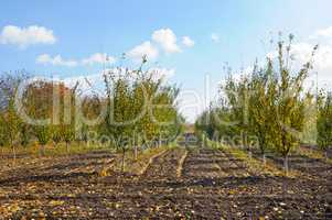 orchard in the autumn after the harvest